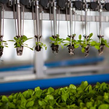 Nigéria quer importar tecnologia brasileira na agricultura