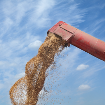 Brazil's grain output to soar 30% in ten years