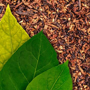 Azerbaijan targets European markets for tobacco exports