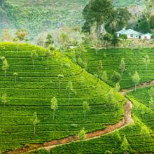 Sri Lanka gets World Bank support for agri modernisation
